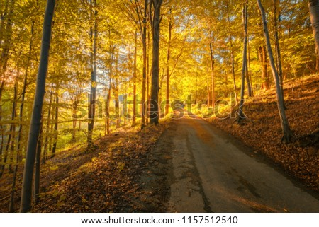 A forest path leading the deciduous forest to the center of the picture. Autumn colors, sunny day. Golden tones. Czech republic, Beskydy mountains.
