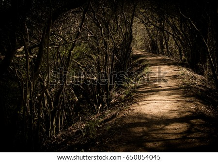 A forest path surrounded by trees, it is impossible to see what is around the corner. stock photo