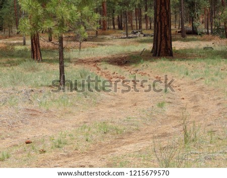 A Forest Service road scattered with pine cones through the Central Oregon woods of ponderosa and lodgepole pine trees.