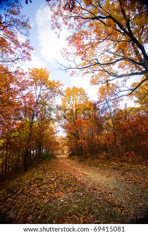 A forest trail in the fall with colorful trees.