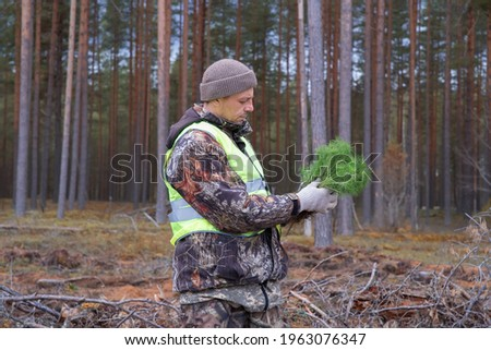 A forest worker holds green tree seedlings in his hands. The concept of reforestation in forestry. Stock photo ©