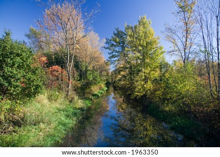 A forested river in Autumn