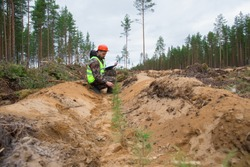 A forester in working clothes is watching planted pine seedlings. The forester checks the planting of trees. Forestry. forest work. Real people work.