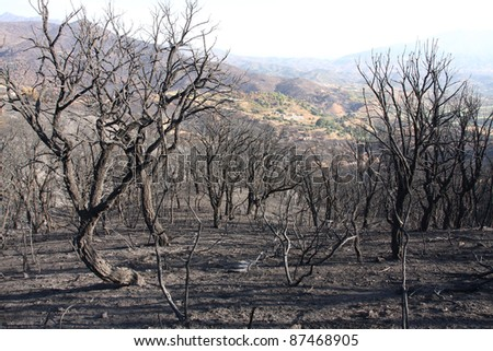 A forrest after a bushfire