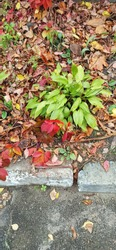 A fragment of a flower garden with different plants, a wild graps with colourful leaves and colourful autumn leaves on the ground in the city park in autumn.