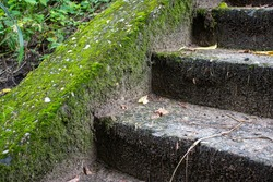 A fragment of an old concrete staircase overgrown with moss. Old stone stairs with moss and weeds. Deserted abandoned city. Ancient staircase of an old building.