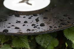 A fragment of an old vinil thrown on a roadside. A black surface covered after rain with water droplets. Macro view on scattered dots of water drops.