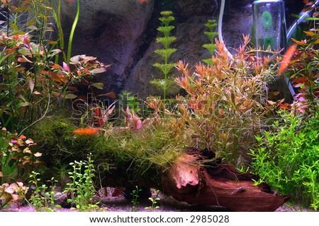 A fragment of aquarium scene, natural lighting
