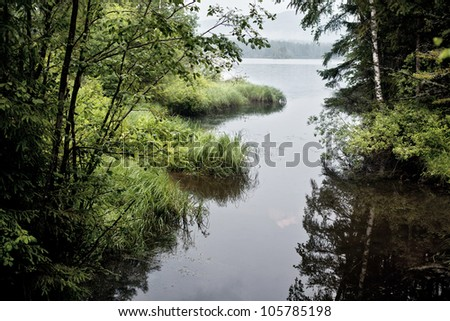 A fragment of the wild nature of the Urals.Summer - stock photo