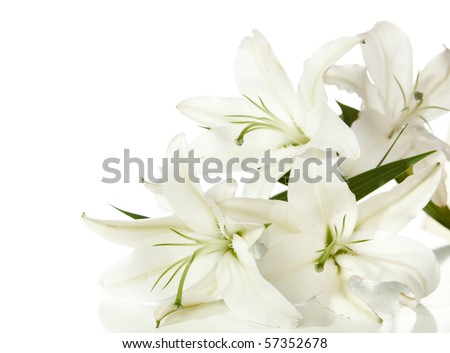 a fragment of white lilies '...