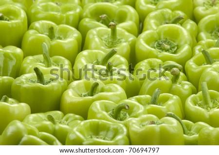 a frame full of green bell peppers