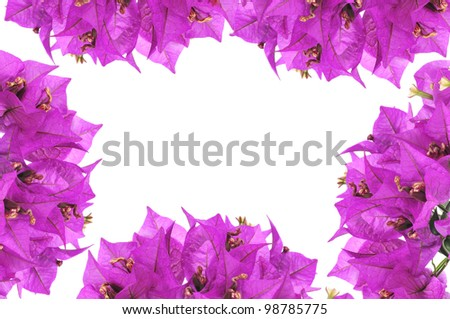 a frame with bougainvillea flowers