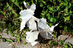 A frayed piece of plastic on the grass - environmental pollution with plastic waste