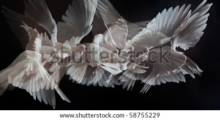 A free flying white dove isolated on a black background #58755229