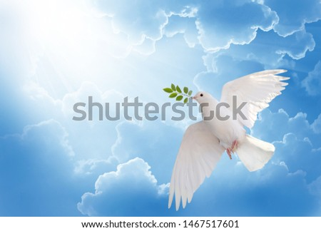 Photo of  A free white dove holding green leaf branch flying in the sky.