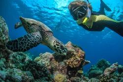 A freedifer making selfie with turtle underwater in Indian ocean in Maldives. Tropical activity water sport design.