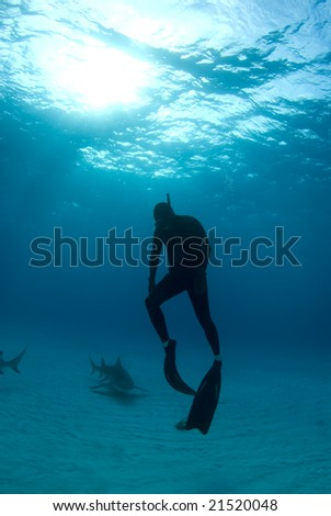 A freediver ascends back to the surface after spending some time interacting with Lemon Sharks