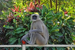 A freely roaming monkey sitting in a park. This was spotted in city of India.