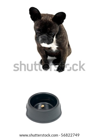 A French Bulldog in front of a dog bowl isolated against a white background