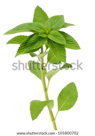A fresh Green mint