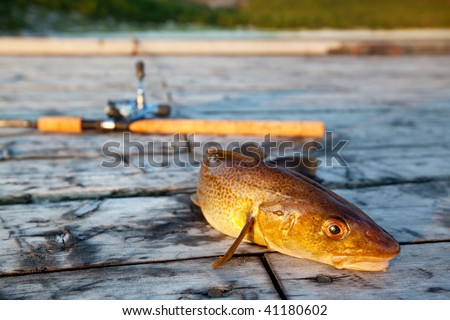A freshly caught cod fish with a fishing rod in the background