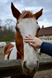 A friendly horse says hello