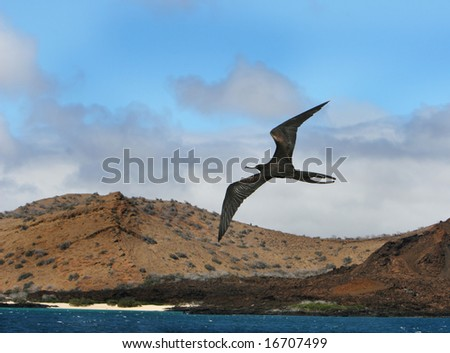 A frigate bird soars high over the ocean with a beautiful beach in the background