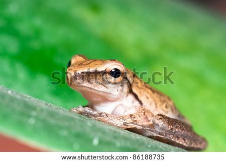 a frog on leaf
