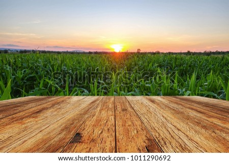 A front selective focus picture of wooden terrace beside agriculture field