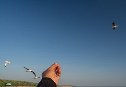 A front view of a man holding an Asian man's hand posing with something in the air. That can also be seen in the background as birds fly around Against the bright blue sky
