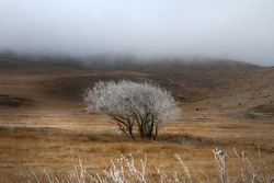 A frost-covered wild apple tree in the foothills. Icy mist drips down from the mountains. The illusion that the tree is covered with white flowers like in spring. North Caucasus