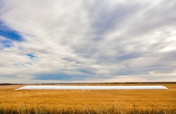 A full long white grain storage bag on a harvested gold colored field under a cloudy morning sky in a autumn prairie countryside landscape