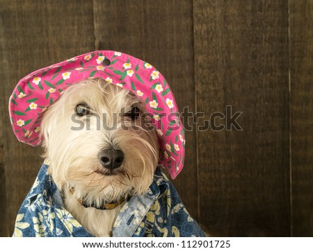 A funny dog dressed in a floppy flower hat and Hawaiian shirt