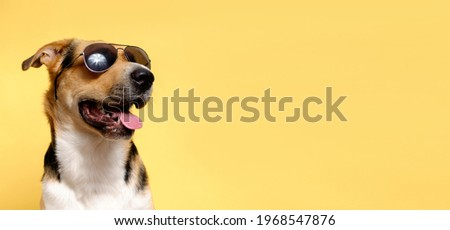A funny dog dressed sunglasses on the yellow or illuminating background. Summer holidays concept. A mongrel dog sunbathes. A tricolor outbred dog sticks out its tongue. Foto stock ©