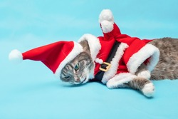 A funny gray cat in a Santa Claus costume lies and yawns hilariously. The concept of a bad year