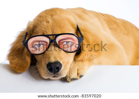 A funny looking dog wearing silly novelty glasses with big eyes.