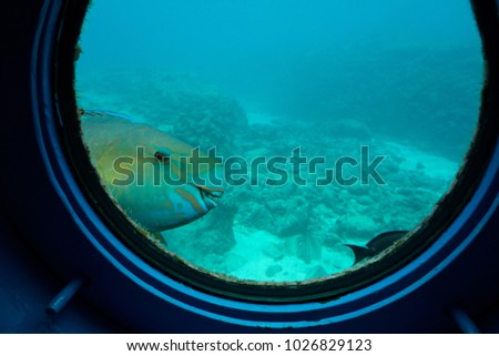 A funny picture of fish is smiling at the round window of submarine