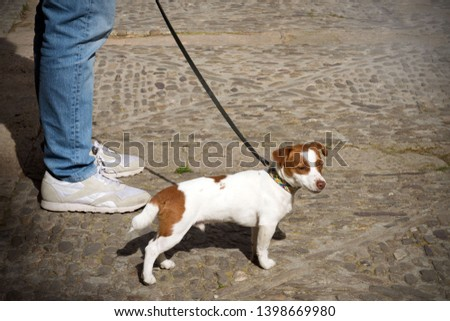 A funny white dog with red spots went for a walk. The dog and the owner are true friends. Walk with your pet on a sunny day. #1398669980