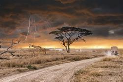 A game drive safari  during thunderstorm in Serengeti National park , Tanzania.