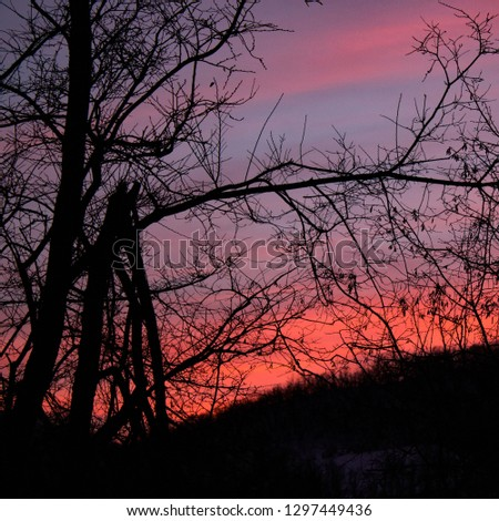 A game of tones and contrasts: amazing pink, burning sunset in the forest with tree branch silhouettes: square pic for social media use