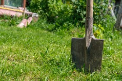 A garden bayonet shovel is stuck in the ground with green grass against the background of bushes and buildings.