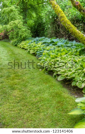 A garden scene with lawn and hosta plants