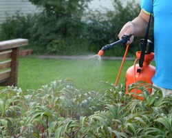 A garden water sprayer. Spray bottle. The orange sprayer is on a green lawn. Men's hand holds garden sprayer. A man sprays plants with water. Processing the garden area