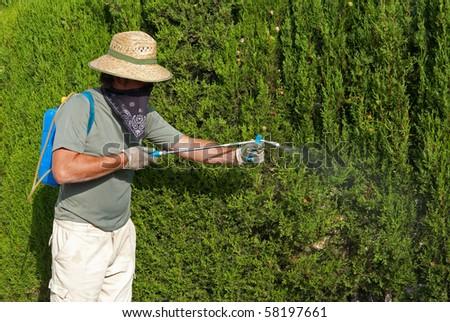 A gardener spraying pesticide