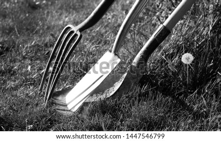 A gardening fork a gardening spade and a gardening shovel leaning against each other surrounded by grass in a garden, black and white photograph, horizontal format