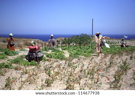 A gathering of scarecrows in Santorini Greece