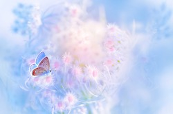 A gentle blue butterfly on a fluffy pink flower in nature in soft pastel colors with a soft focus, macro. Dreamy, romantic, elegant, art image of  living nature