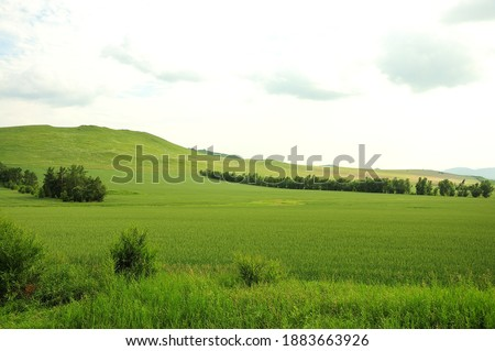 A gentle slope of a high hill overgrown with grass and rare bushes. Khakassia, South Siberia, Russia. Stock fotó ©