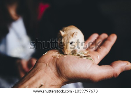 a gerbil eating quietly on the hand