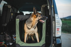 a german shepherd is a soft crate in the car. the trunk is open and the dog i peeking out of his crate from the car. the vehicle is black and big and dog is a male german shepherd. crate training